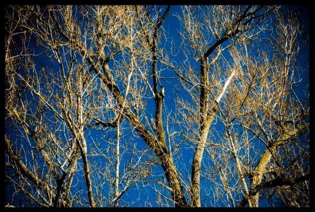 massey-walk-silver-trees-1