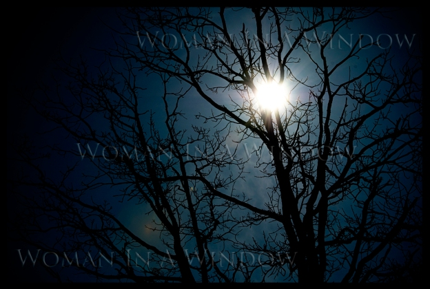 massey-walk-sun-through-tree-landscape