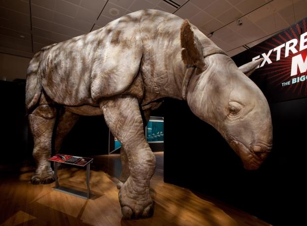 Indricotherium - Giant Animal