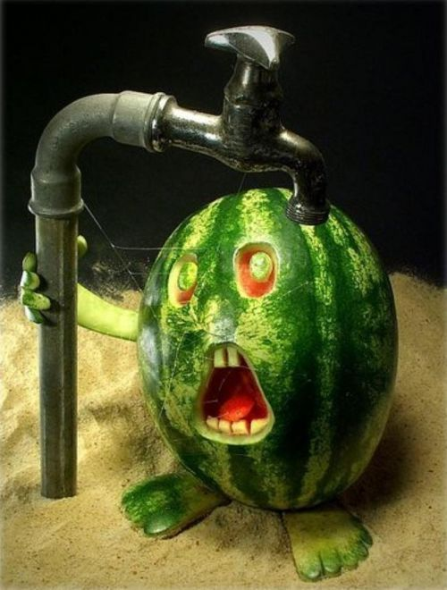 watermelongettingdrink