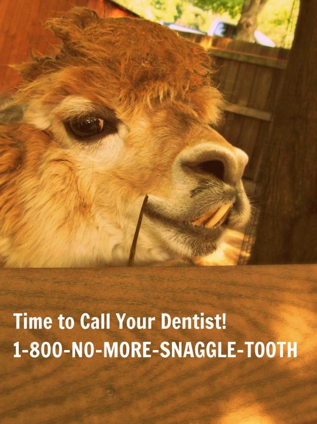 Dentist Zoo Print