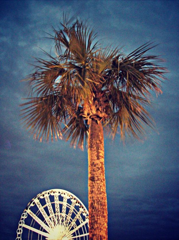 Palm Tree Pensacola Beach