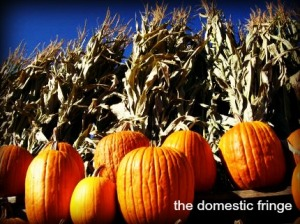 fall foliage, pumpkin, corn stalks