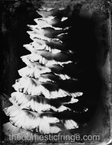 black and white vintage tree